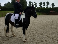 13.1HH Coloured Mini Cob