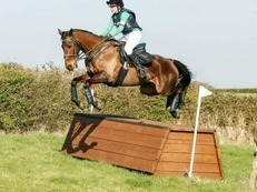 Sole chance 16.2hh bay gelding