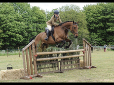 15hh working hunter