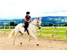 16.3 KWPN Mare For Sale