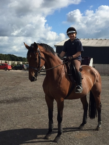 16.3hh, 10yrs Allrounder