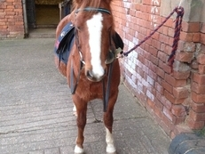 Super 1st/2nd pony 12.2hh to share in Warwickshire