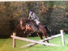 16hh 6 year old bay warmblood gelding SOLD,SOLD
