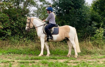 ** STUNNING PALOMINO & WHITE PONY ** SUITABLE FOR KIDS AND MUMS! **