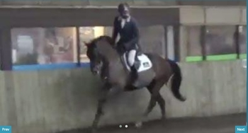Showjumper / Eventer / Dressage - super sweet allrounder with all the movement