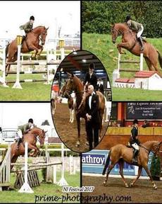 Competition mare – 16.1hh 8yr Old