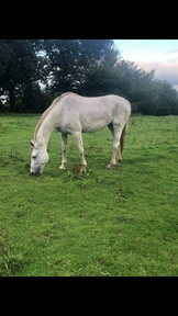 Proven Top Class SJ/Eventing Broodmare for sale