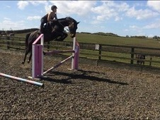 ***REDUCED, OPEN TO OFFERS FOR QUICK SALE**Warmblood mare PERFECT...