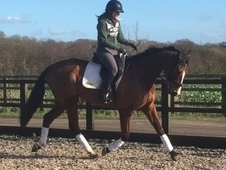 Stunning 10 yr old 16'2 gelding SOLD