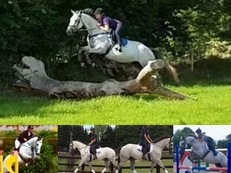16.1hh 7yo Sensible/Genuine Well Bred