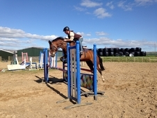 Greylands Pretty Woman 15hh 6yo mare