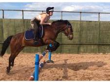 Superb New Forest Gelding For Sale or Full Loan