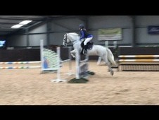 14hh super competition pony **** now open to offers***