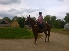 16.3hh 9yo gelding bred to jump by Cruise on serious potential