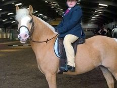 Bryn - Welsh Section A -  Great first ridden workers / show pony for a confident, capable rider