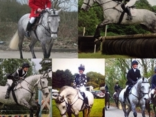 Hunter/all round horse