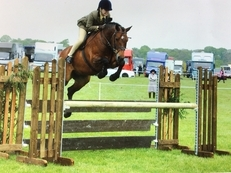 Talented 143cm(full up) Irish sports pony