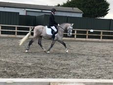 **REDUCED** Absolutely stunning 15:3 PRE Andalusian Gelding
