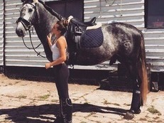 16.3hh 4yr old Andalusian stallion
