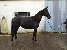 Competition prospect: 2 year old filly
