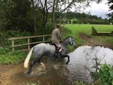 Very smart grey gelding - would make a good mother daughter share