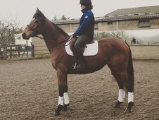 """Willow Jubilee"" 16. 1h ex race mare 2012"
