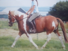 12 year old 14.2 h Coloured Mare for loan