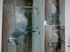 Gorgeous section a ponies for sale