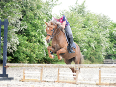 **Not to be missed**Perfect second pony