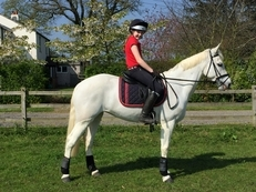 Brilliant Ponyclub / Competition/ Allrounder