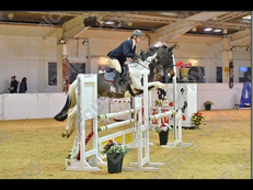 Stunning 6yr old show jumper by Zalando