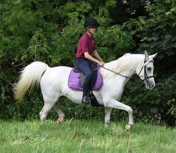 Fazia - sweet 8 year old mare.