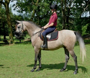 Lovely 3 year old gelding
