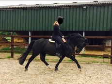 ***FOR SALE*** Stunning Welsh sec D mare