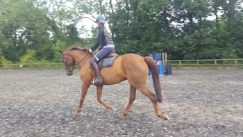 Interesting ROR Dressage prospect