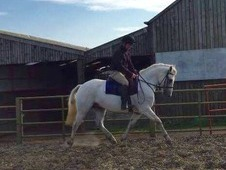 Top class 14 hd m and m WHP / future event pony / all round compe...