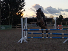 14hh All Rounder