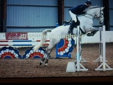 SOLD Stunning Grey 7 yr mare by ZIROCCO BLUE VDL