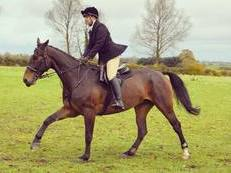 **PART LOAN** for 17.2 12yr old gelding