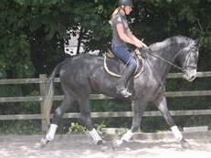SMART YOUNG HORSE FOR SALE