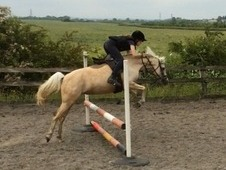 Honey 13hh superstar