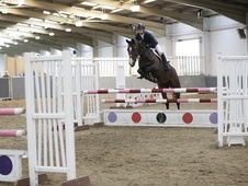 16. 1hh quality Allrounder