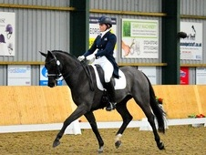 Advanced Dressage Horse - Small Tour