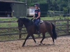 13.2HH, 10YO MOTHER'S DREAM 1st/2nd PONY