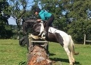 Fun Irish Cob Mare
