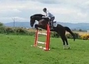 Irish Sport Horse SJ/Event horse for sale