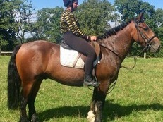 Riding Club/ Allrounder