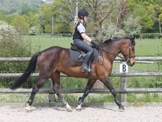 Honest 15.3hh bay mare for loan