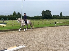 Beautiful 16.1HH Grey Mare