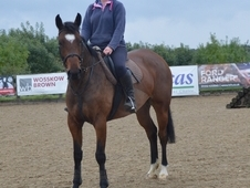 *Reduced* 16hh Irish mare